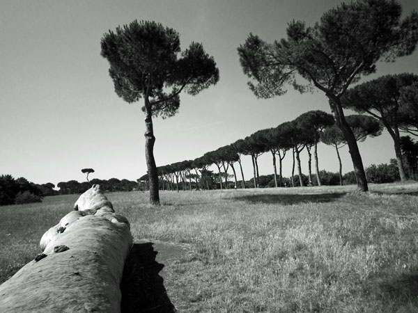 Doria Pamphilj pines
