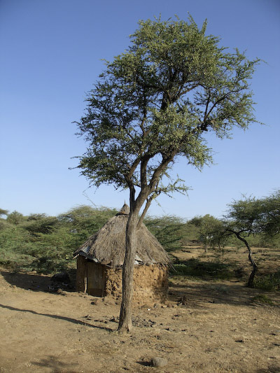 hut and tree